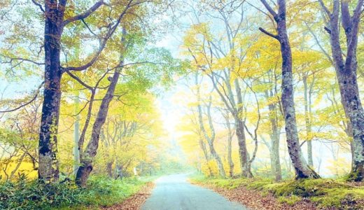 【体験談】山でのリゾートバイト18日間で手取り15万円【紅葉を山頂から一望】