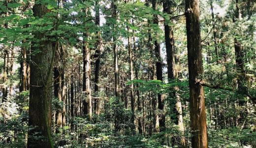 【最高】箱根のリゾートバイトは時給も1100円!温泉も無料で入れて割と神